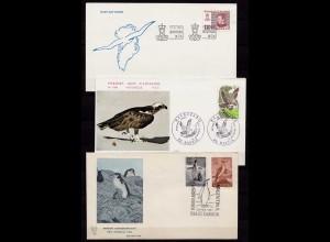 Vögel Tiere Wildlife Birds 3 covers or cards (b254