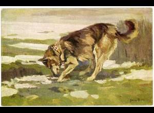 AK Hund Sanitätshund im Felde Wohlfahrtskarte Malerei signiert (2931
