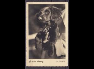 AK Hund Hundefoto gelaufen Waldmünchen nach Freising (10516