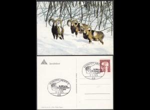 Münster Westf. Eröffnung Allwetter-Zoo 1974 m. SST auf Spendenkarte Muffelwild