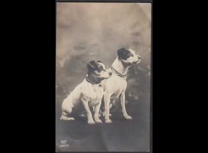 AK 2 Hunde 1930 gelaufen FAS 6957/3 (66171
