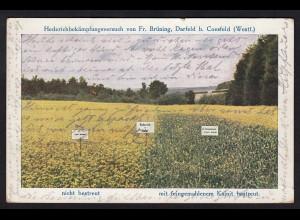 AK Darfeld bei Billerbeck Coesfeld Brüning Hedrich Bekämpfung 1914 (16793